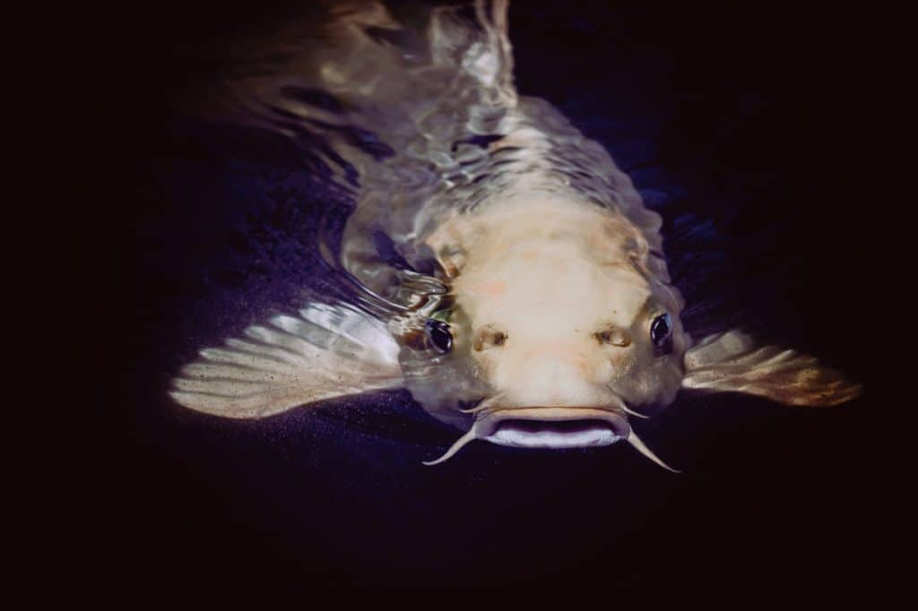 Tips & Tricks for a Successful Catfish Fishing