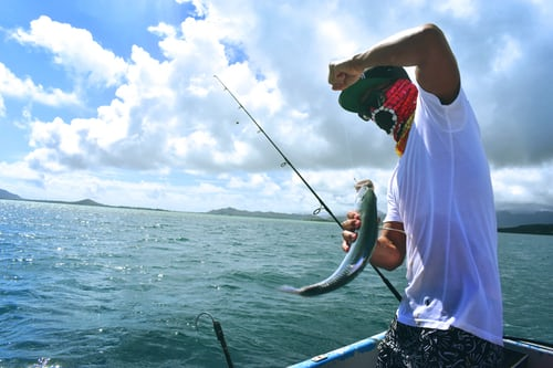 Fishing Reels For Better Experience