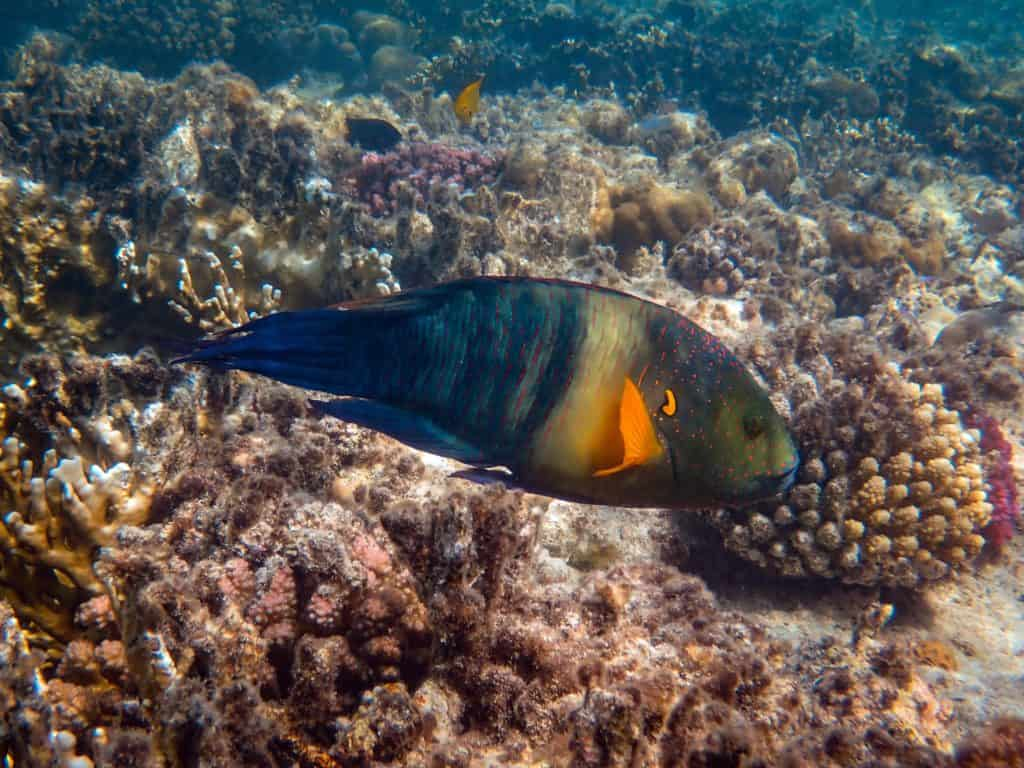 Discover Different Types Of Dangerous Fish In Ocean