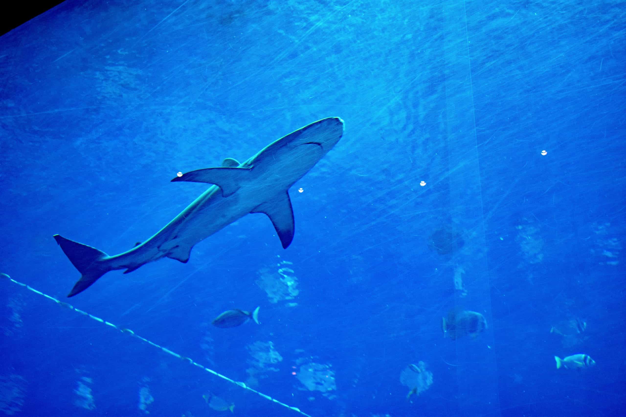 Shark Fishing: Catch Fish For Dinner With A Shark