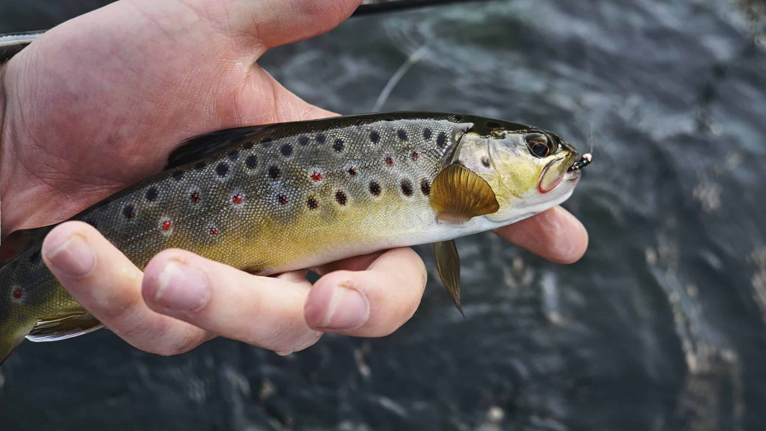 Learn How To Hook A Fish With Ease